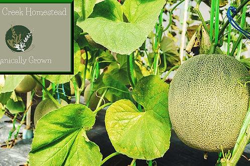 Organic Cantaloupe Melon Seeds