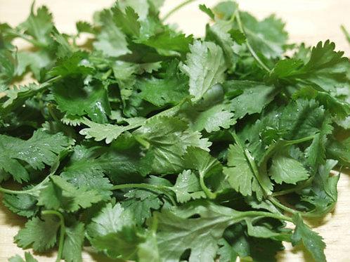 CILANTRO Coriander Garden Herb Cooking Spice Organically Grown