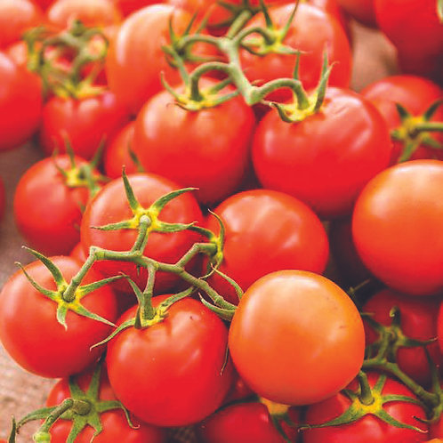 Sweetie Cherry Tomato SEEDS Organically Grown