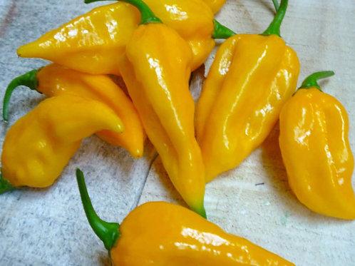 Fatali HOT Pepper Organic Seeds