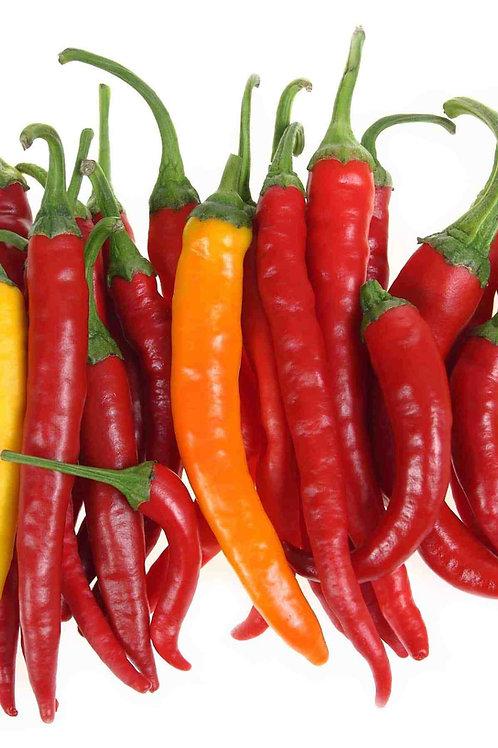 India Jwala HOT Pepper Organic Seed