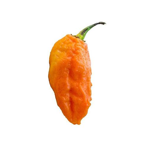Bhut Jolokia Peach Ghost SUPER HOT Pepper Organic Seeds