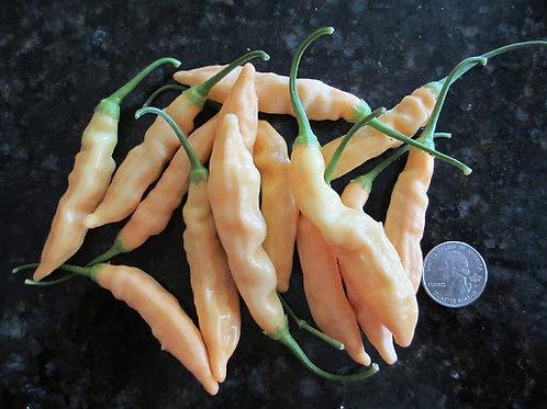Aji Melocotan HOT Pepper Organic Seeds