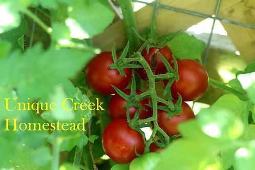 Chadwick Cherry Tomato SEEDS Organically Grown