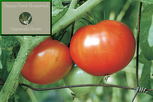 Red Beefsteak Tomato SEEDS Organically Grown