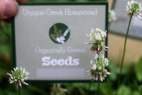 Trifolium repens WHITE CLOVER herbaceous perennial plant Cover Crop Organically