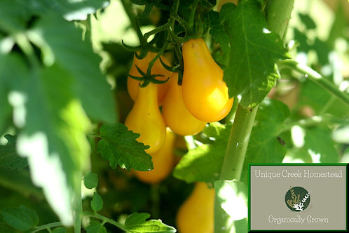 Yellow Pear Tomato SEEDS Organically Grown