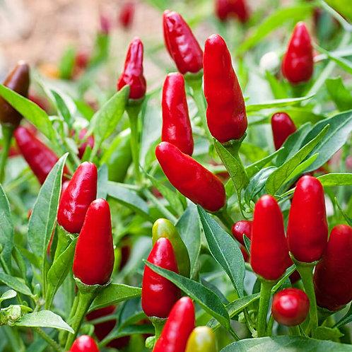 Thai HOT Ornamental Pepper Organic Seeds