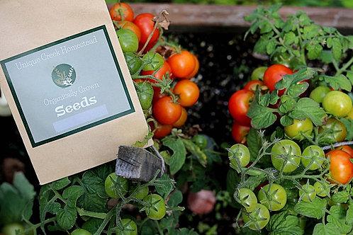 Tiny Tim Dwarf Tomato SEEDS Organically Grown