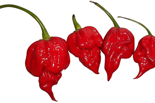 Trinidad Scorpion SUPER Hot Pepper Organic Seeds