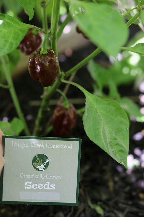 Chocolate Habanero Chili Pepper Organic Seeds