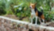dog-on-wall_4460x4460.jpg