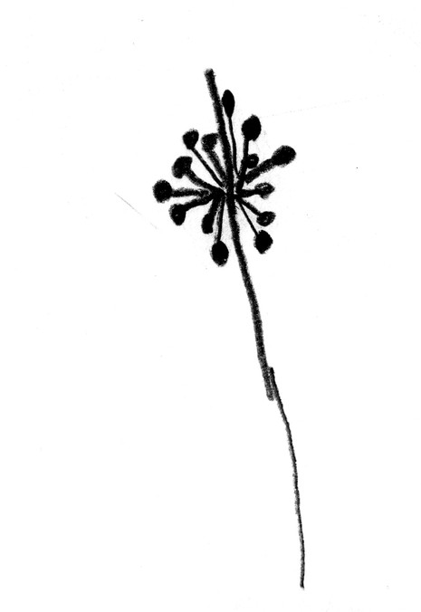 Seed Drawing 03 Rush.jpg