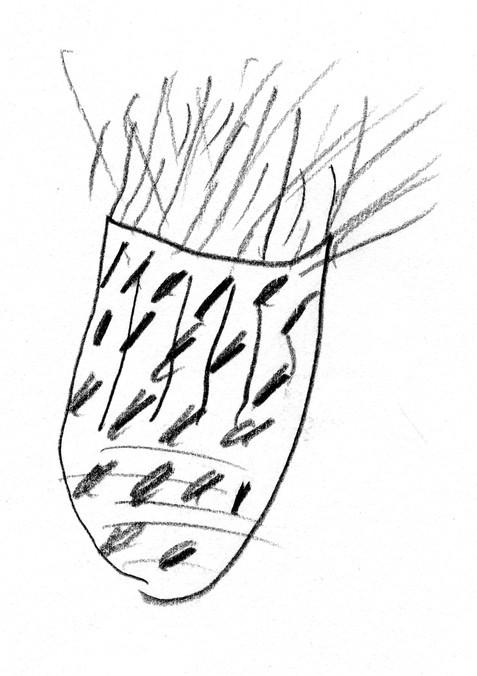 Seed Drawing 04 Dock.jpg