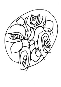 Seed Drawing 05 Alder.jpg
