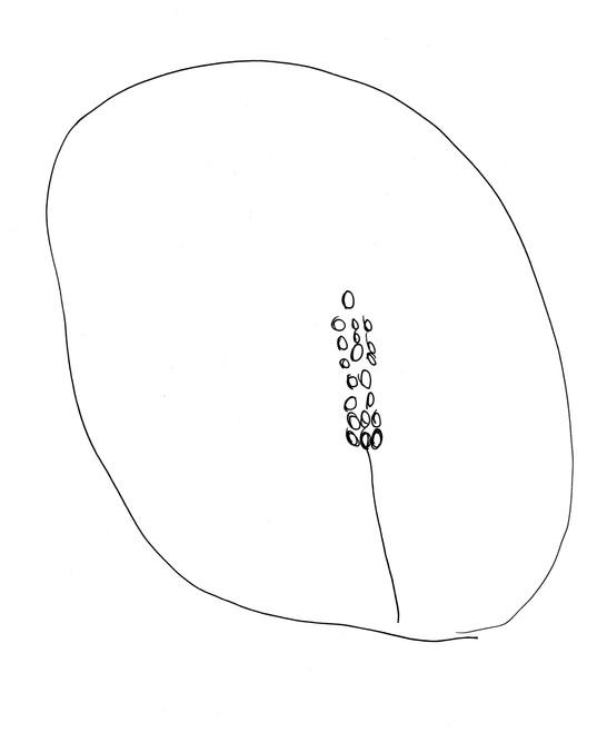 Seed Drawing 24 Dish.jpg