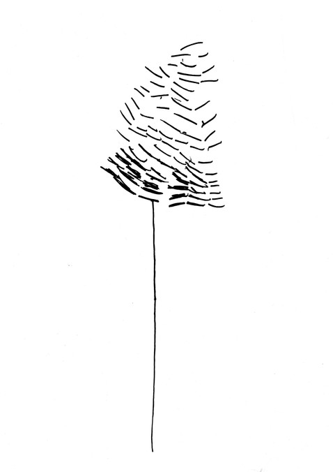 Seed Drawing 08 Alder.jpg