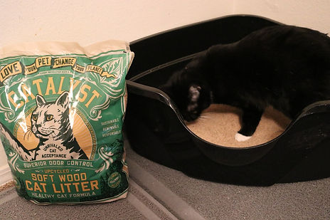 Catalyst Pet litter packet next to a cat and its litter