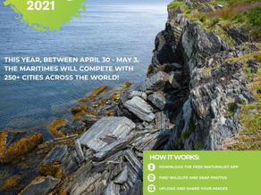 2021 City Nature Challenge - The Maritimes