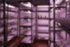 Стеллажи для выращивания растений «СТЕЛЛАР-ФИТО LINE» в Российском государственном аграрном университете – МСХА имени К.А.Тимирязева