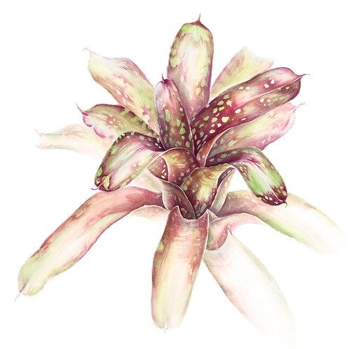 Aquarela Bromélia