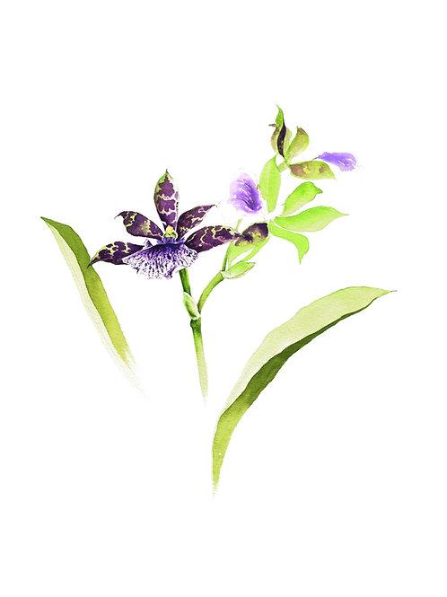 Aquarela Orquídea Roxa