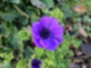 WI garden.jpg