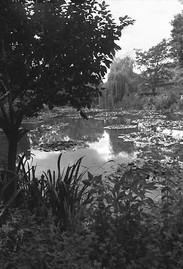 Monet's Garden | Le Jardin de Monet