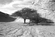 Tree | Arbre