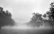 Morning Fog | Matin de Brouillard