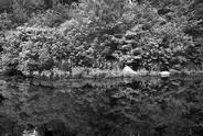 Maple Swamp | Marais d'Erables