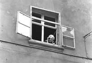 Woman in Window