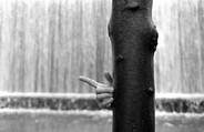 Hand | Une Main