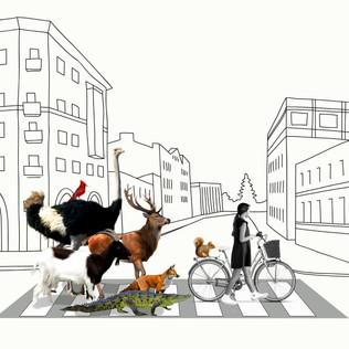 Animals on the street_3.jpg