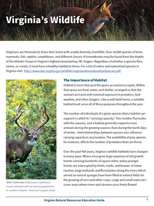 Virginia's Wildlife