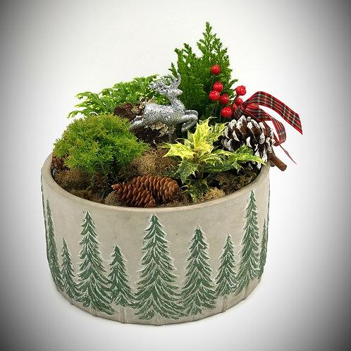 Winter Dish Garden