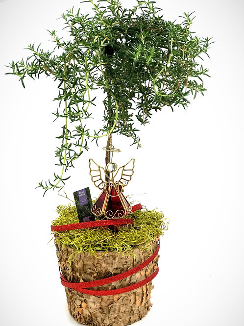 Beautiful Holiday Rosemary Topiary Tree with an Angel