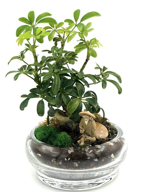 Meditation Bonsai Tree