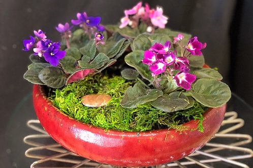 Dish Garden with African Violets