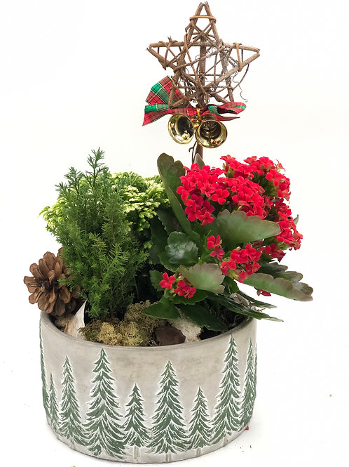 Festive Christmas Dish Garden