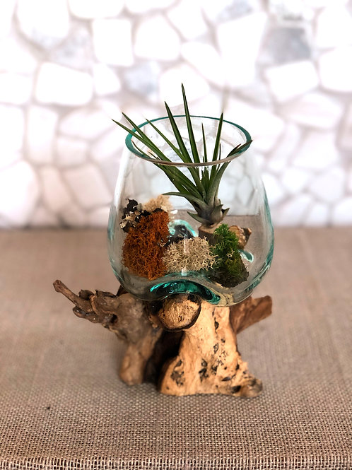 Driftwood and Hand-blown Glass with Tillandsia Lonantha Air Plant