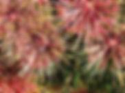 Fireworks Flower 26.jpg