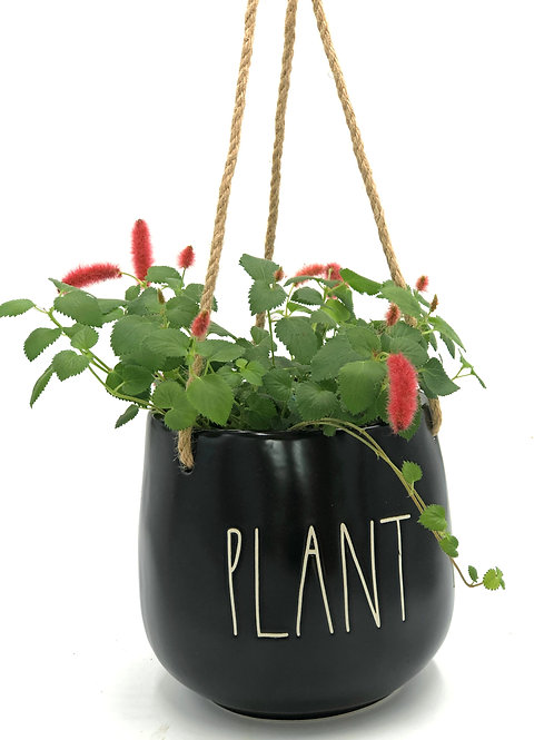 Hanging Chenille Plant in a Ceramic Planter