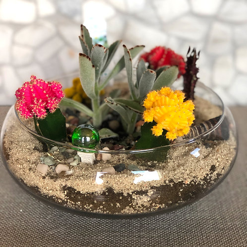 Glass Terrarium with Cacti and Succulents