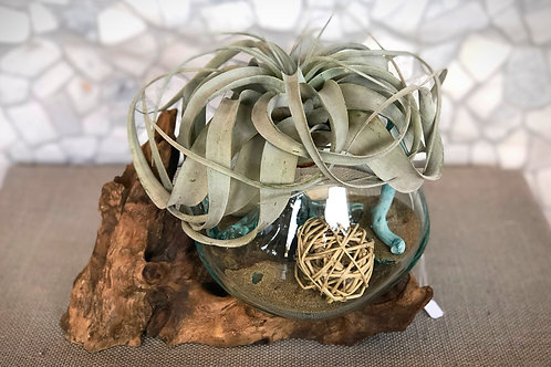 Driftwood and Hand-blown Glass with Tillandsia Xerographica Air Plant