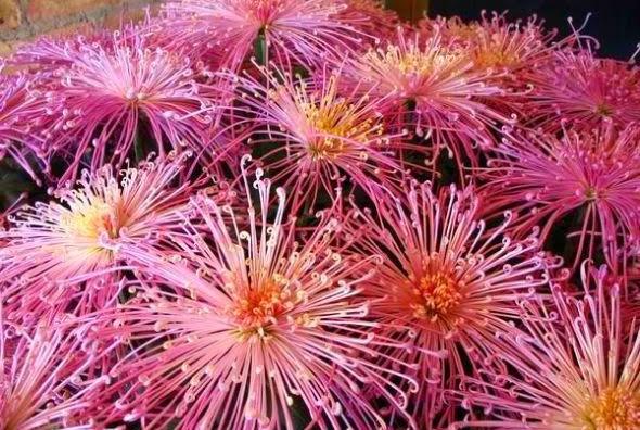 Fireworks Flower 29.jpg