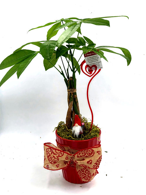 Lucky Money Tree for your Valentine