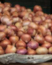 Onions USDA