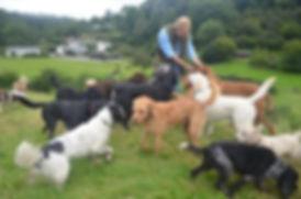 Dog holiday Wales