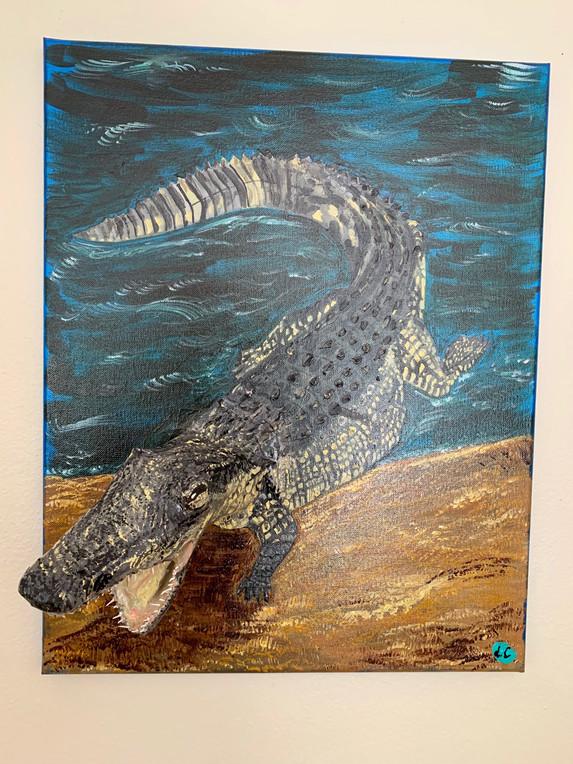 Aligator 3D